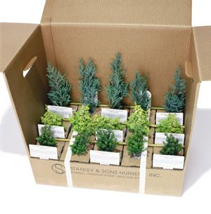 Shipping cutaway for Dwarf and Miniature Conifers